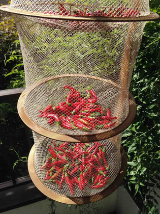 Red_pepper